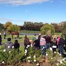 All Too Hard at the Vinery Stud Stallion Parade