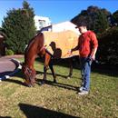 Andriy with Jolie Bay the morning after her magnificent G2 win