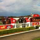 Carlton Mid Clydesdales... Wyong Cup Day