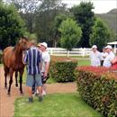 Stallion parade at Widden Stud