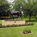 Coolmore stallion barn