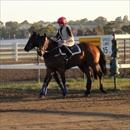 Horses about to be worked at Flemington