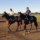 Colts returning after trackwork