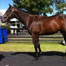 Inglis Easter Yearling Sale 2011 Lot 250 Fastnet Rock x Fortunata colt