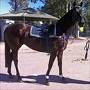 Happy Zero at Warwick Farm trials