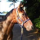 Stratford enjoying the Gold Coast sunshine after his win