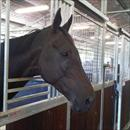 Maluckyday at the rosehill stables