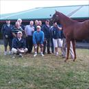 Karaka 2011 Lot 490 Pentire x Foxy Blonde colt 'Group of very happy clients'