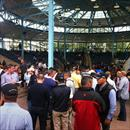 Inglis Easter Yearling Sale 2011