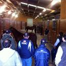 Inspecting yearlings inside Winsor Park Stud's yearling barn