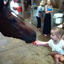 Jason Taylor's daughter Jessica giving Stratford carrots after his win
