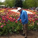 John Inspecting the Tulips at Floriade Canberra