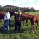 John with Adam White in the paddock with some Weanlings...