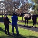 John with Chris Barham looking at Champion Colt Pierro