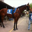 Jolie Bay at Hawkesbury races