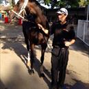 La Amistad after her outstanding performance at Warwick Farm !!!