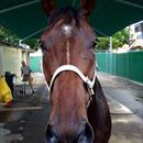 Leebaz after his outstanding 2nd place in the Doomben Cup 1st attempt 2000m 1st attempt at WFA