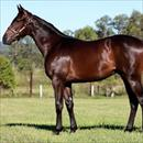 Magic Millions Lot 238 Lonhro – I'm a Showoff Colt