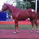 Inglis Easter Yearling Sale 2011 Lot 150 Flying Spur x Arkadina colt