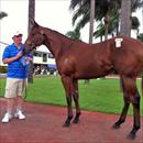 Lot 124 at the QTIS sales Gold Coast