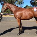 Melbourne Premier Sale Lot 71