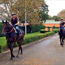 Messene and Mecir strolling together after their morning trackwork