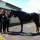 Michael Tang and Michael Lam with their horse 'Greenwich' at Limitless Lodge
