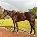 Rainbow Styling enjoying the QLD sunshine