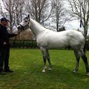 Rich Hill Stud Stallion ..... Mastercraftsman