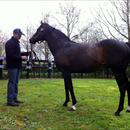 Rich Hill Stud's Stallion .... Pentire