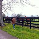 Simon Reid looking at yearlings at The Oaks Stud