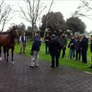 Steve Till talks to the group about their new Stallion 'Rip Van Winkle'
