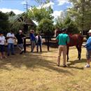 Team Hawkes inspecting yearlings at Karaka