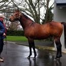 Waikato Stud's stallion 'Pins'
