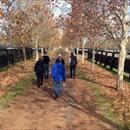Walking down the beautiful Stallion Row @ Arrowfield stud