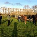 Yearlings at Cambridge Stud